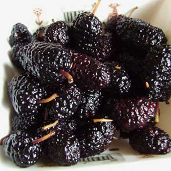 blackmulberry2
