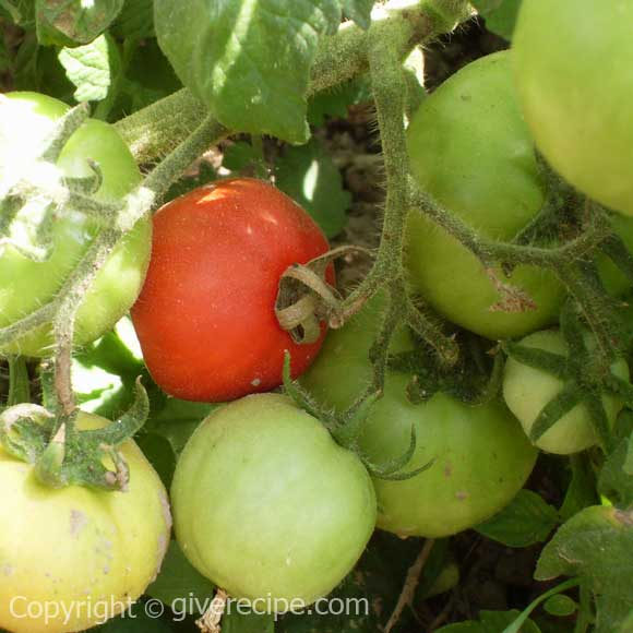 Tomato back to normal price| giverecipe.com