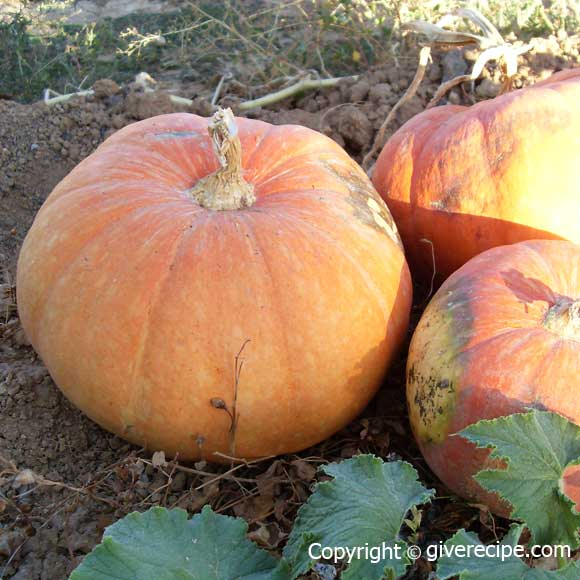 Pumpkin In Season | giverecipe.com