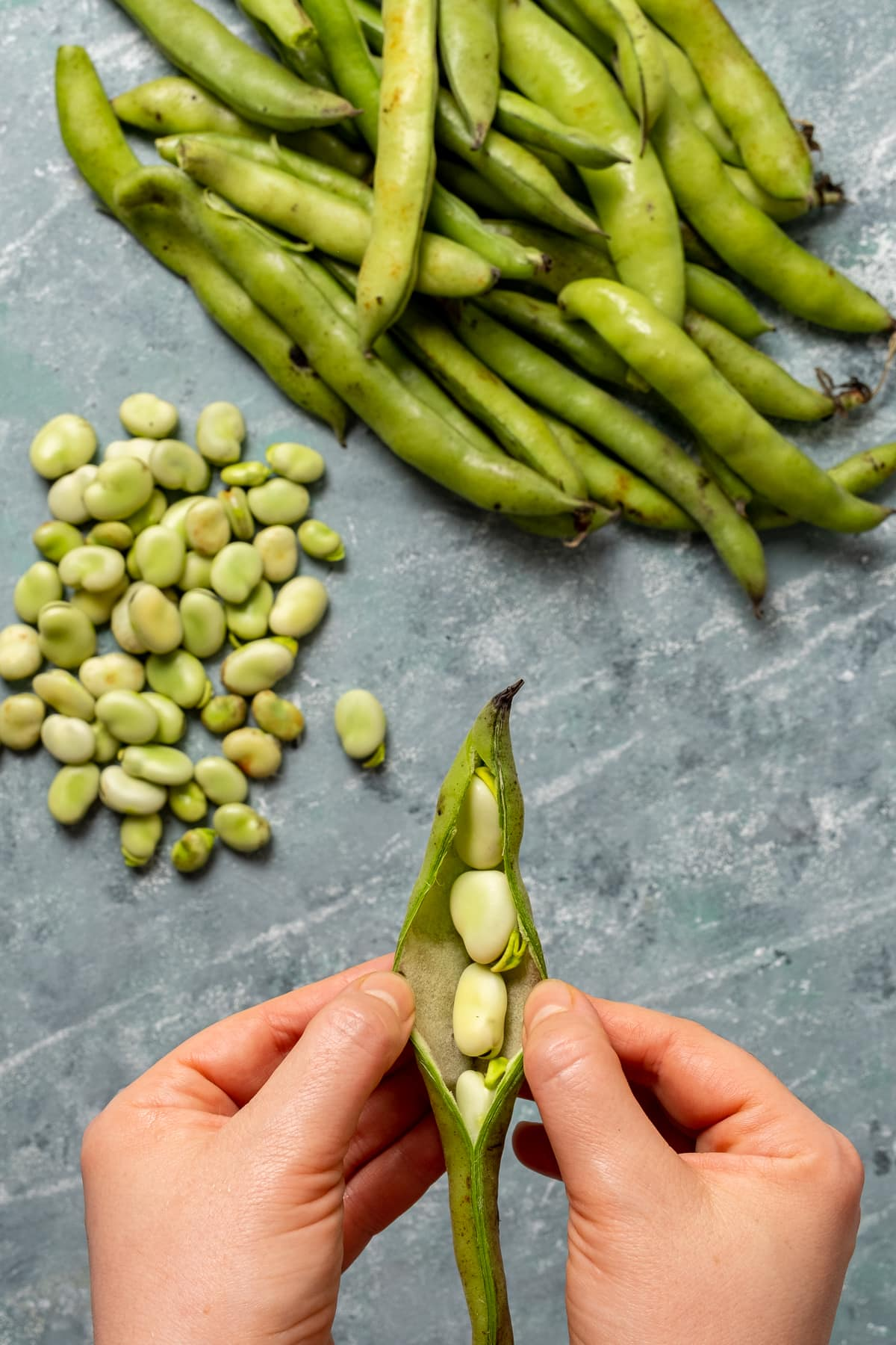 Hands removing fava beans from their pod, more fava bean pods and beans on the background.