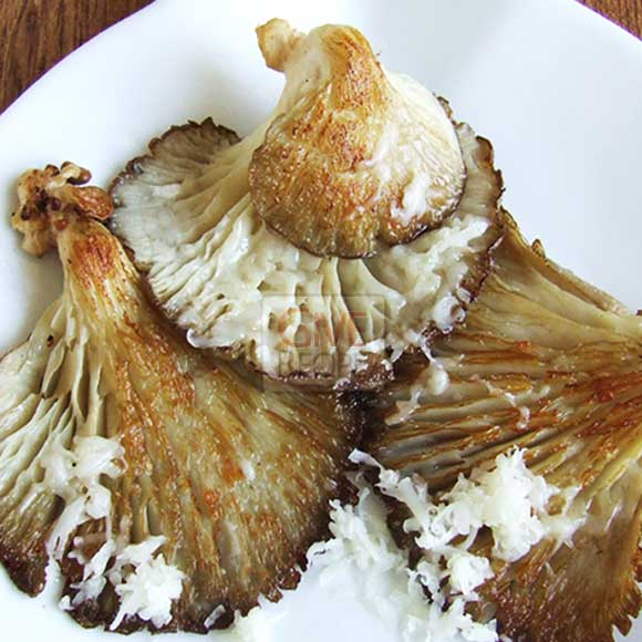 Oyster mushrooms with cheese on a white plate