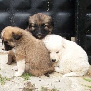 Cute Puppies | giverecipe.com